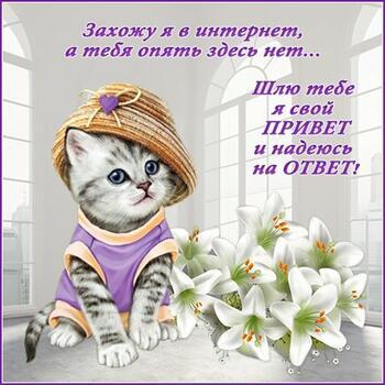 Postcard free kitten, tex, hello