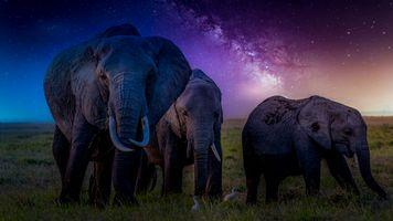 Фото бесплатно Кения, Африка, слоны