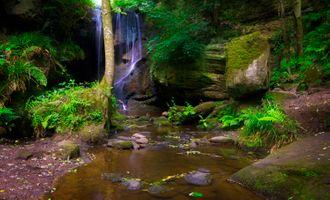 Фото бесплатно камни, дерево, лес