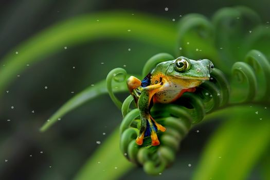 Photo free frog, view, green background