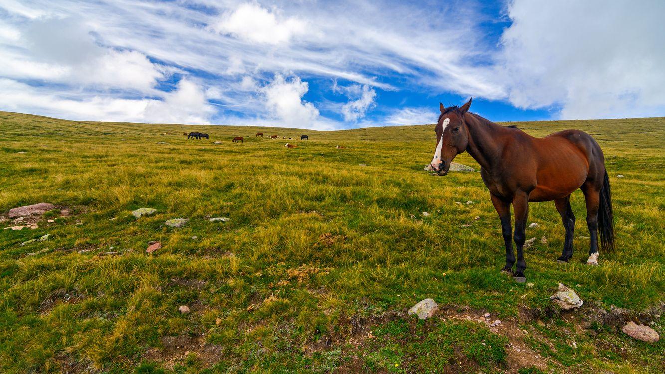 Фото животные лошади небо - бесплатные картинки на Fonwall