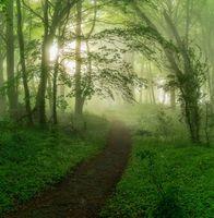 Заставки туман, тропинка, лес
