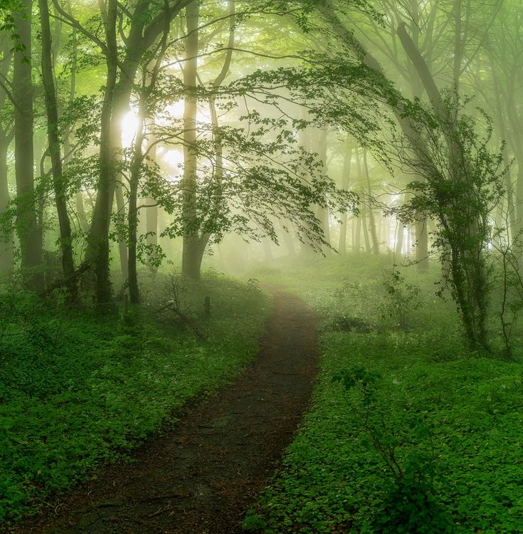 Фото бесплатно лес, деревья, тропинка, туман, природа, природа