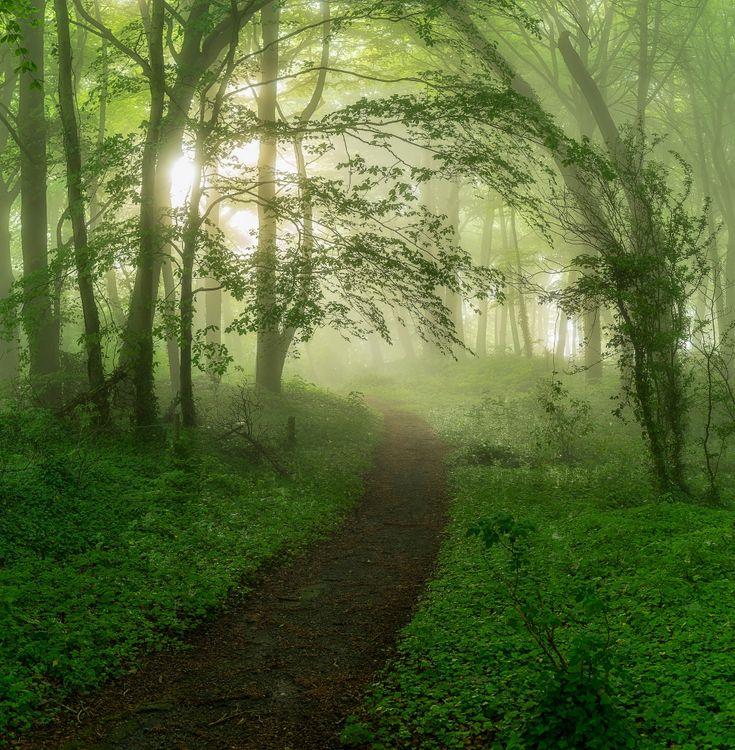 Фото бесплатно туман, тропинка, лес - на рабочий стол