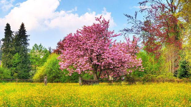 Photo free garden, ecosystem, wildflower