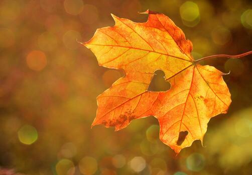 Фото бесплатно сердце, осень, размытый фон