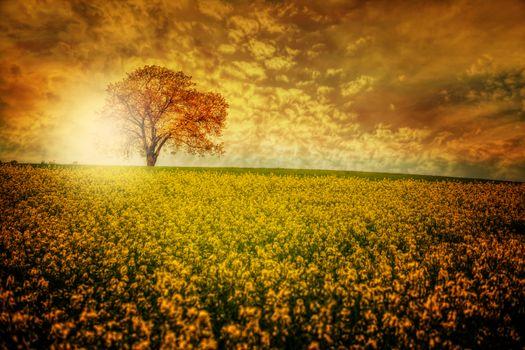 Фото бесплатно закат, Облака, цветы