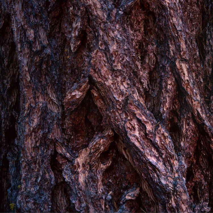 Фото бесплатно кора, дерево, поверхность, bark, wood, surface, природа