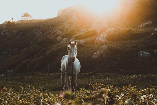 Заставки белый конь, величественная, солнечный свет