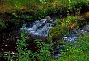 Фото бесплатно лес, деревья, водопад, скалы, водоём, природа