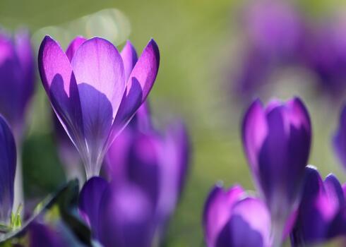 Photo free flora, flower, light