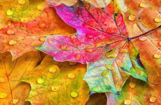 Заставки капли, природа, осень