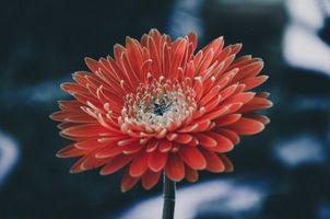 Фото бесплатно астры, цветы, лепестки