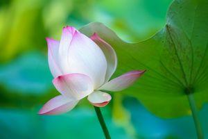 Фото бесплатно водная красота, красивые цветы, цветы