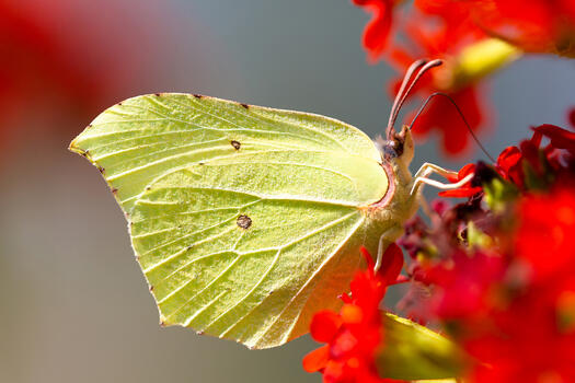 Photo free butterfly, closeup pussy, macro
