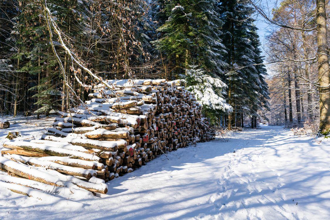 Фото снег леса природа - бесплатные картинки на Fonwall