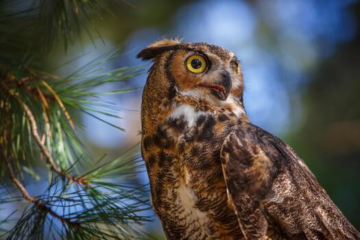 Фото бесплатно сова, близко, птицы