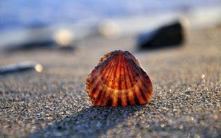 Фото бесплатно морская ракушка, песок, пляж