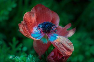 Фото бесплатно полевой цветок, цветы, зелёный