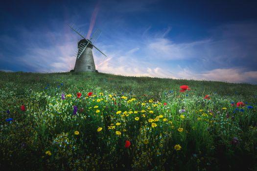Фото бесплатно поле, мельница, цветы, пейзаж