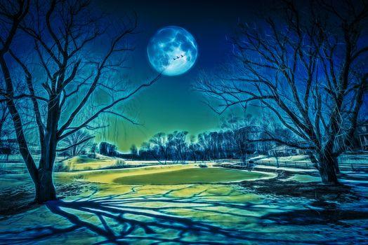 Фото бесплатно Луна, деревья, пруд