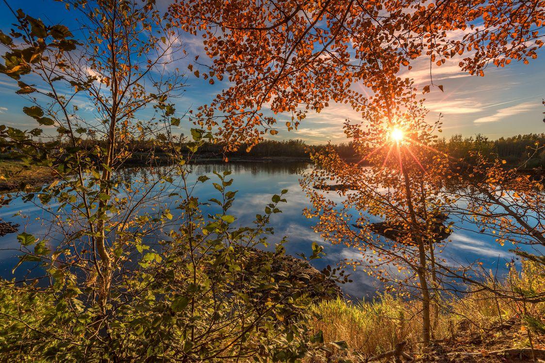 Обои осень, закат солнца, озеро, деревья, лес, природа, пейзаж картинки на телефон