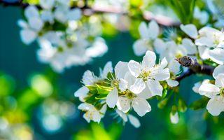Фото бесплатно флора, цветение, дерево