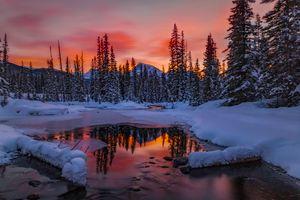 Фото бесплатно лед, зима, деревья