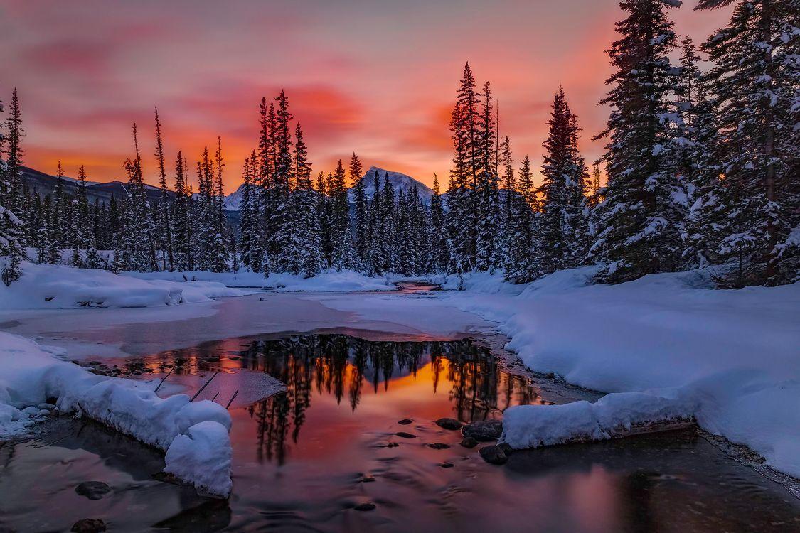 Фото бесплатно лед, зима, деревья - на рабочий стол