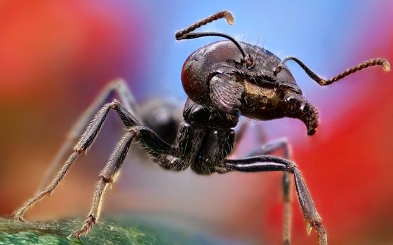 Photo free ant, close-up, macro