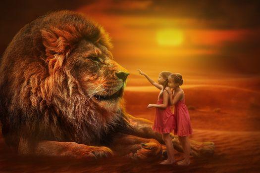 Бесплатные фото лев,хищник,животное,дети,девочки,взгляд,взаимопонимание,отношение,характер,фотошоп