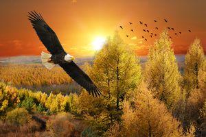 Фото бесплатно деревья, арт, закат