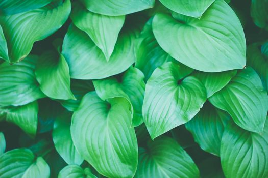 Photo free outdoor, plant, leaf