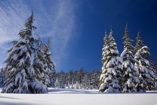 Photo free spruce, landscape, snow