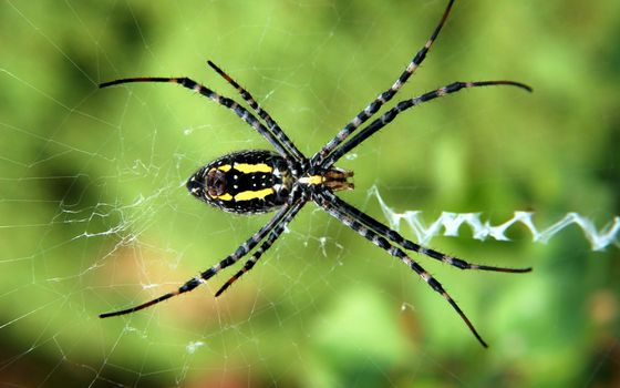 Photo free yellow garden spider, insect, macro photography