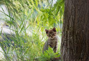 Котёнок позирует в траве у дерева
