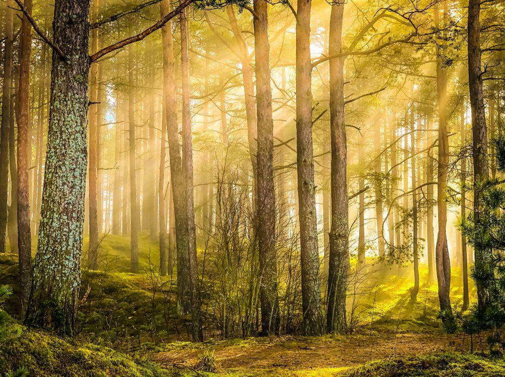 Скачать лес, деревья обои на телефон бесплатно