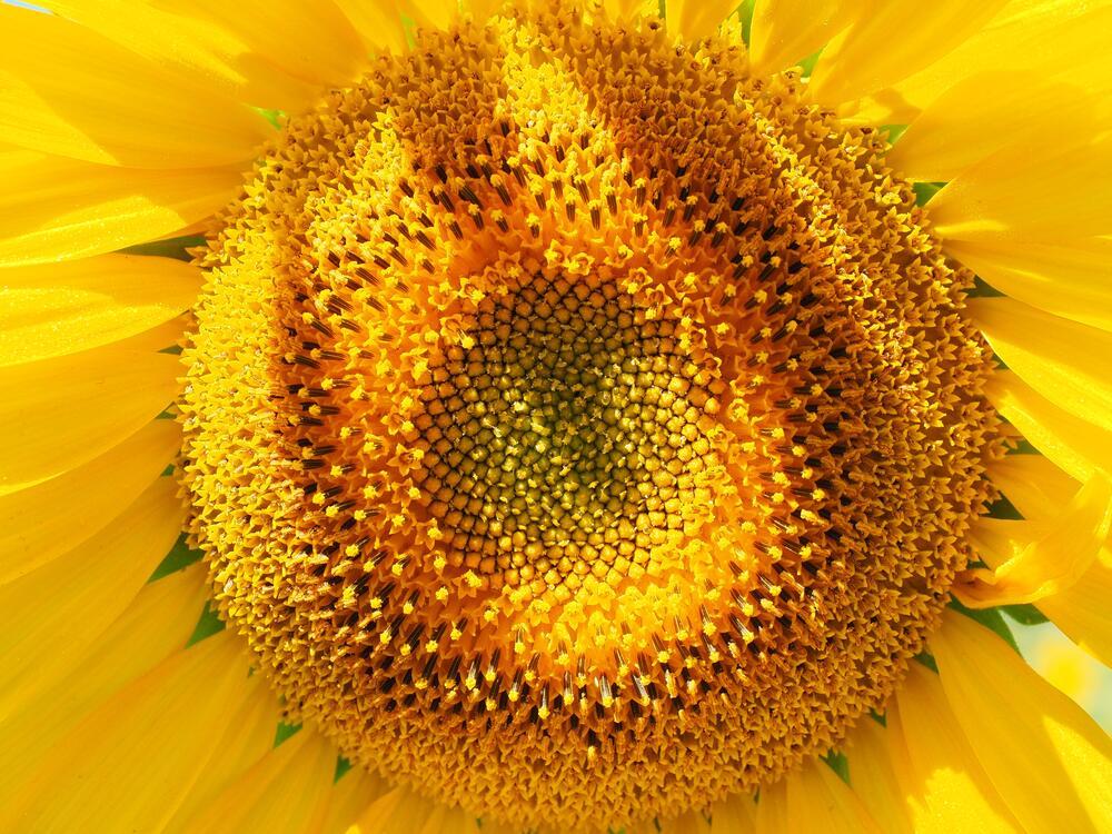 Фото солнечный желтый цветок - бесплатные картинки на Fonwall