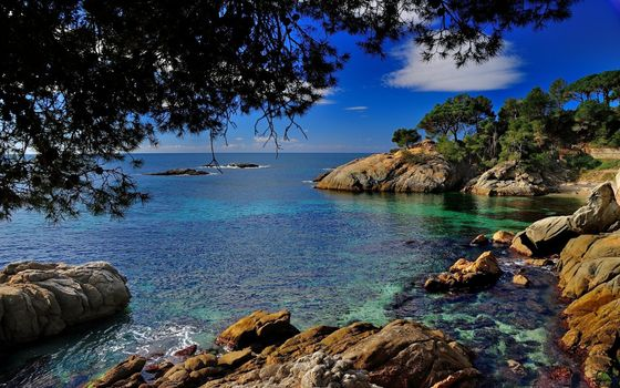 Photo free nature, sea, branches