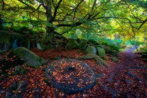 Бесплатные фото осень,лес,деревья,парк,тропинка,камни,пейзаж