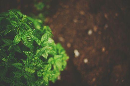 Photo free green, macro, plant