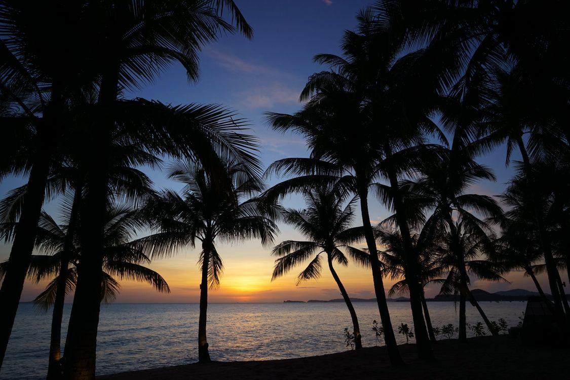Фото бесплатно силуэты, волны, пальмы - на рабочий стол