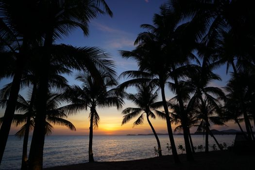 Заставки силуэты, волны, пальмы
