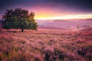 Бесплатные фото закат, поле, лаванда, цветы, дерево, пейзаж