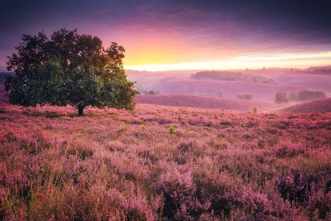 Фото бесплатно цветы, дерево, закат - на рабочий стол