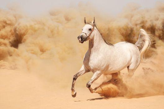 Фото бесплатно красивый, конь, песок