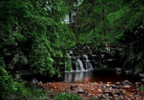 Бесплатные фото лес, деревья, камни, водопад, пейзаж