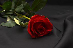 Бесплатные фото роза,розы,цветок,цветы,цветочный,цветочная композиция,флора