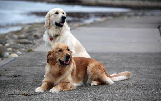 Photo free dog, pozvonochnye, breed of dog