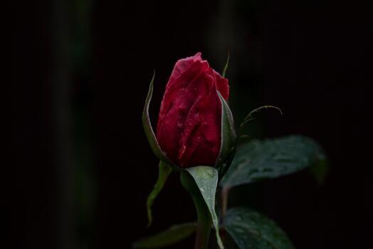 Фото бесплатно природа, растение, лист